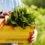 Книги о вегетарианстве. Что можно почитать.